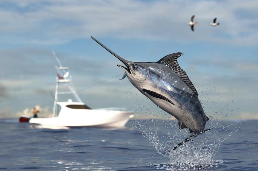 GIANT SWORD FISH JUMPING OUT OF WATER WITH A BOAT IN THE BACKGROUND